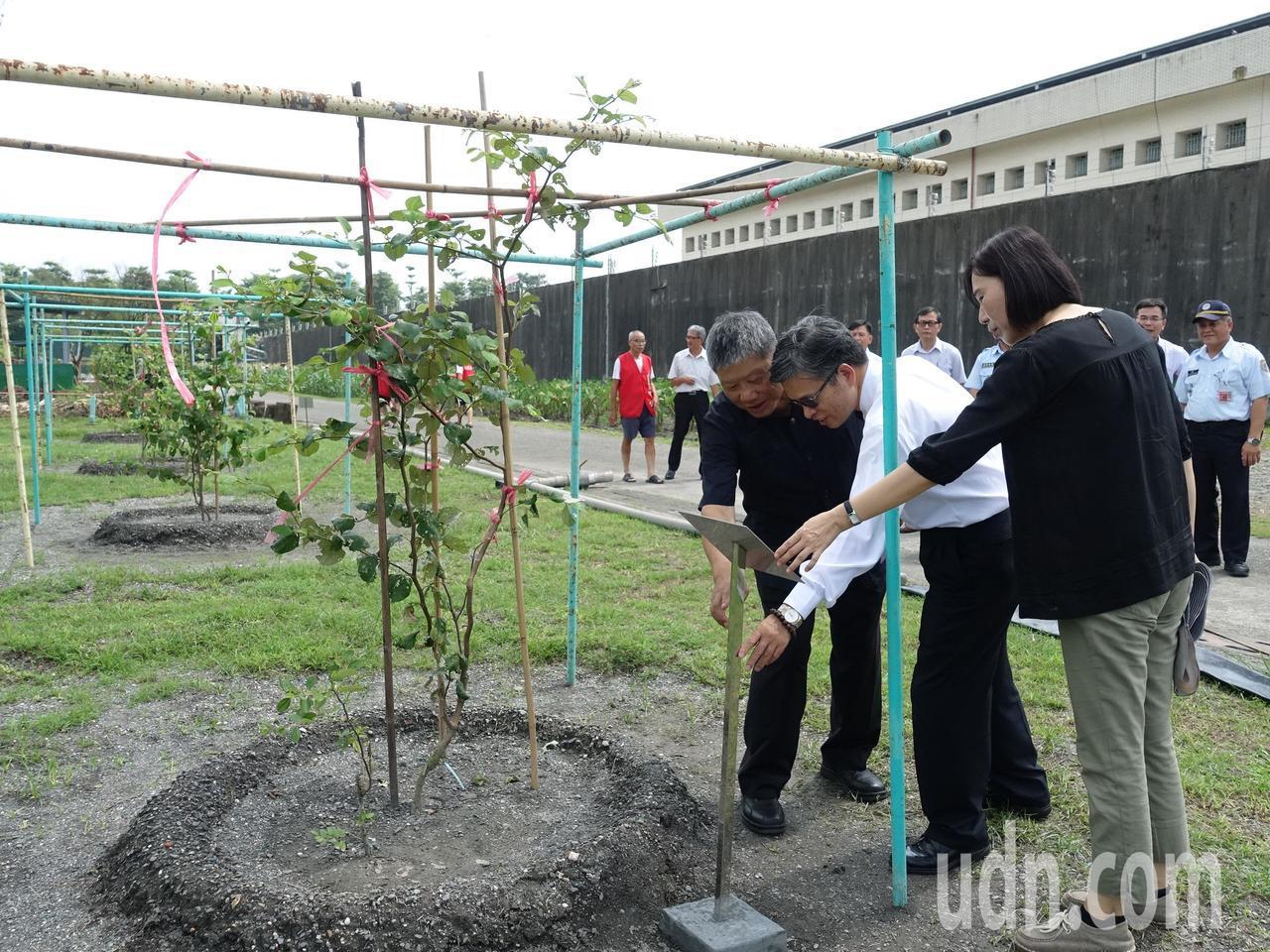 屏東地檢署檢察長林錦村(中)與典獄長簡文拱(左一)觀察收容人種植的蜜棗。記者翁禎...