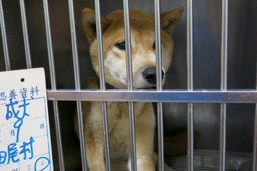吳宗憲/公民的支持,是政府管理私人動物收容所的最後一哩路
