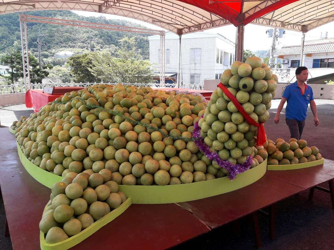 宜蘭縣冬山鄉中山社區發展協會辦柚子節,今天以7千顆柚子堆成壽龜,本月15日開放擲...