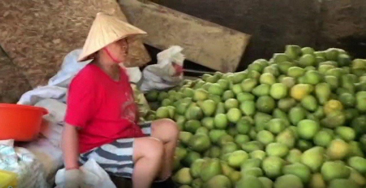 新西街柚子阿嬤家中淹水,鄰居幫忙搶救不少柚子回來。記者游明煌/攝影