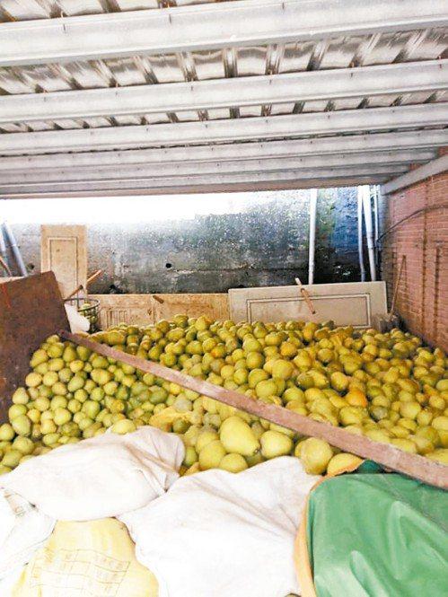 李姓阿嬤的柚子在水災時被搶救出來。 圖/取自基隆人大小事