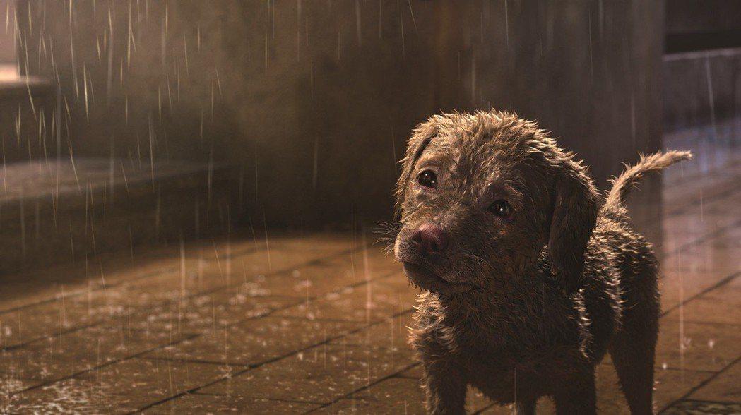 「狗狗傷心誌」劇照。圖/台中國際動畫影展提供