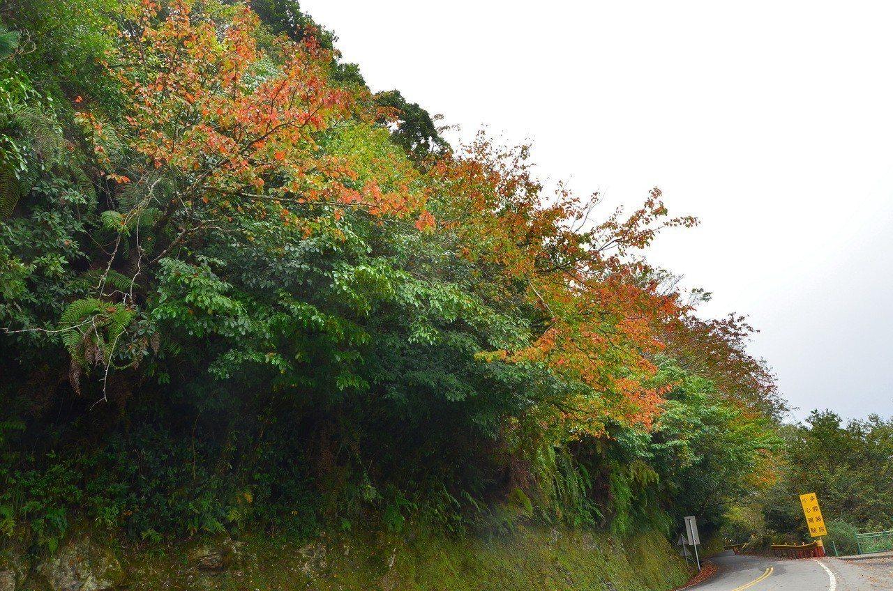 秋天的太魯閣峽谷,生物豐富、多樣,輕鬆的步道行程,就能欣賞到秋天的太魯閣的季節性...