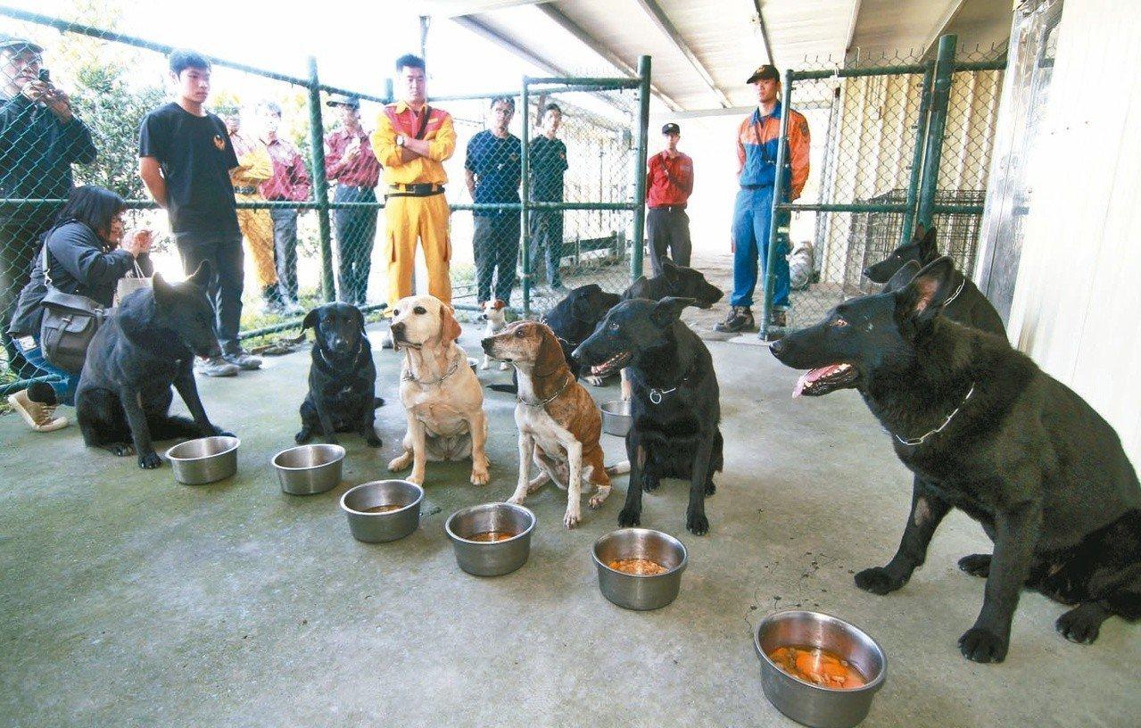 九二一大地震後,台灣才逐步訓練搜救犬,至今台灣有30多隻搜救犬,消防署特搜隊說,...
