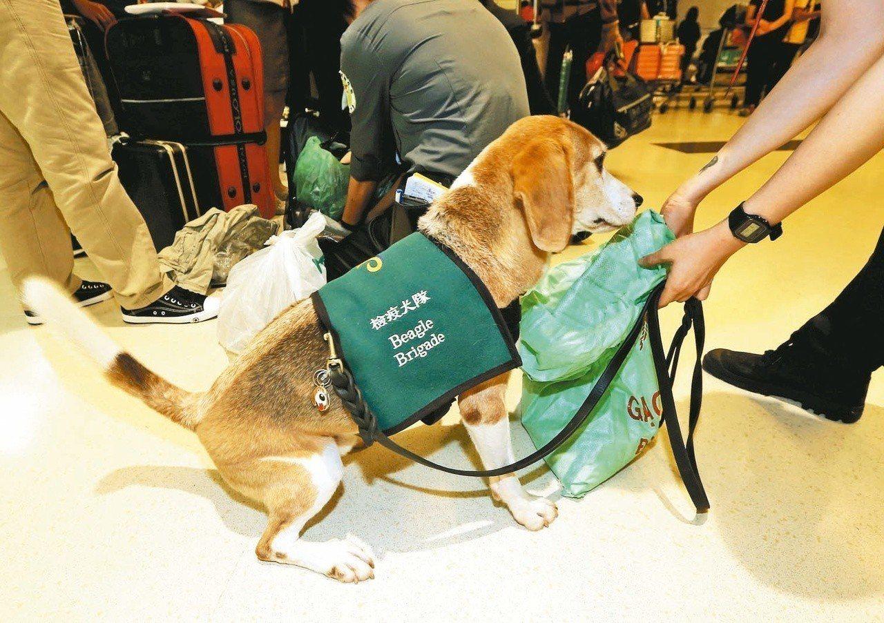 檢疫犬示意圖。 圖/聯合報系資料照片