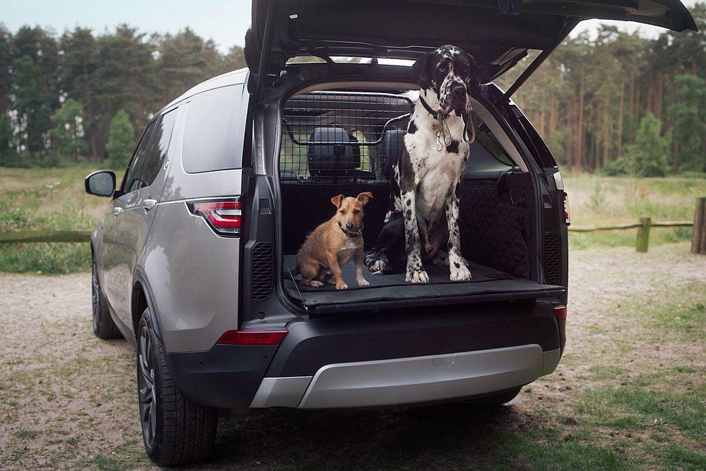由於休旅車底盤高度問題,讓部分車廠開發毛小孩專屬上下車套件,大幅增加便利性。 圖/Land Rover提供