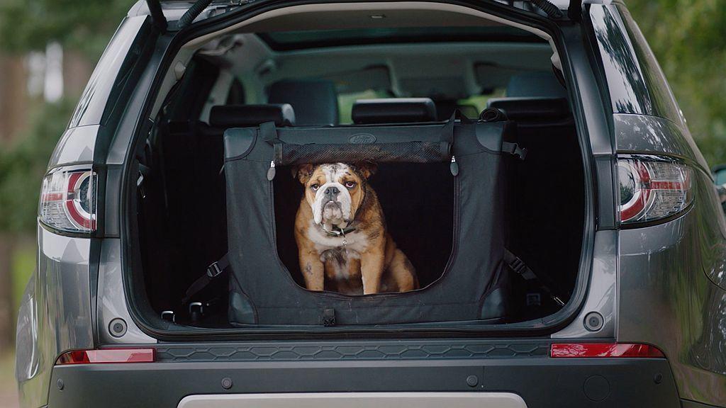 英國豪華越野車品牌Land Rover汽車,日前推出車用毛小孩選配套件並可以依照車主的需求選擇不同配件等級。 圖/Land Rover提供