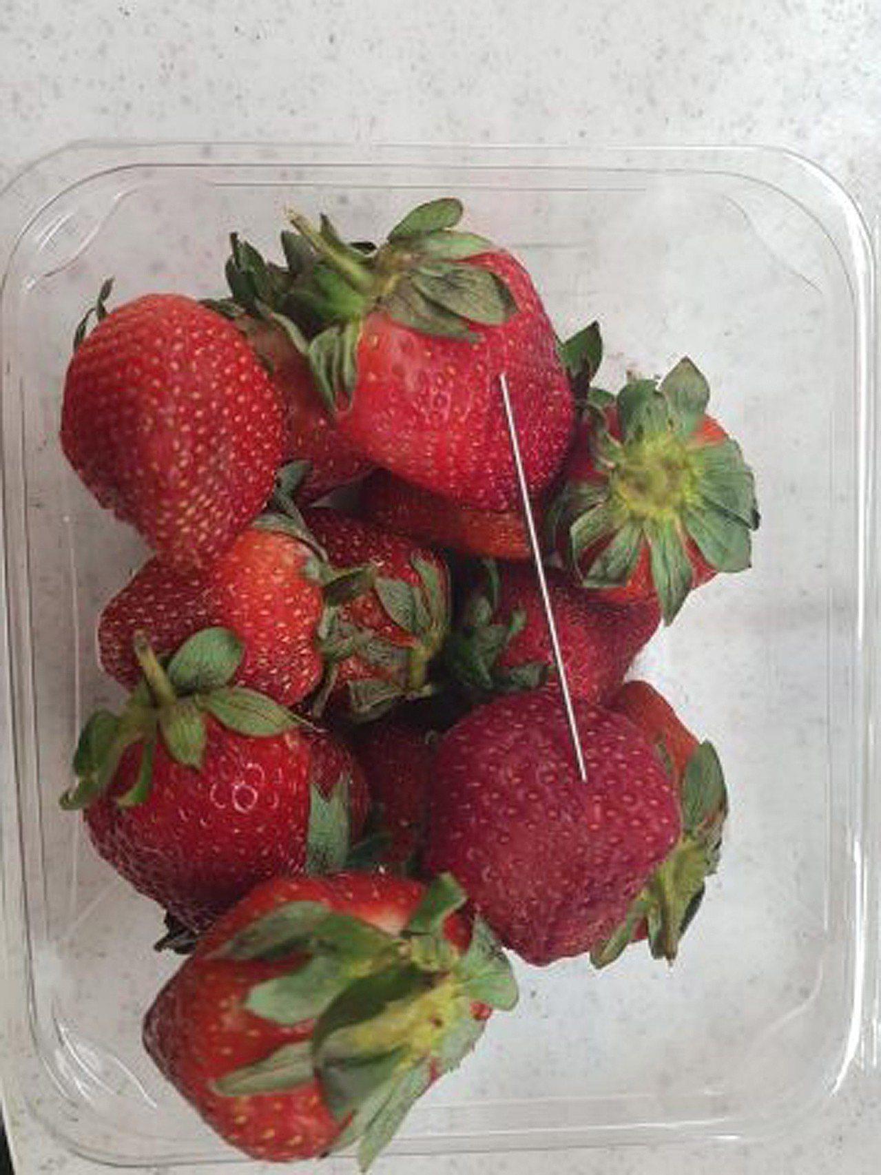 澳洲六個品牌的草莓遭人插針,昆士蘭政府懸賞10萬澳幣緝凶。歐新社