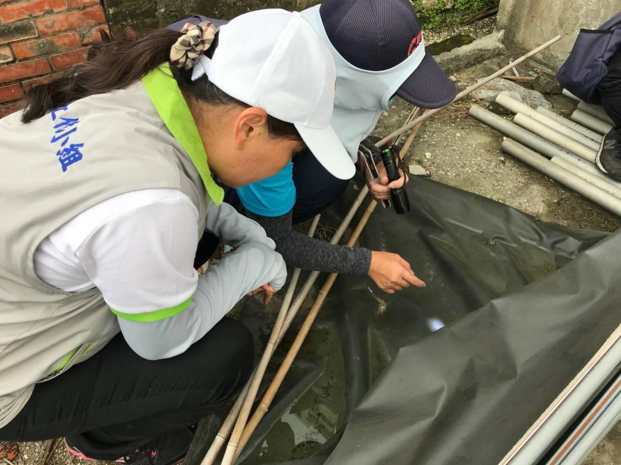 登革熱工作小組在旗津區警戒里高風險場域聯合複查。圖/高雄市衛生局提供