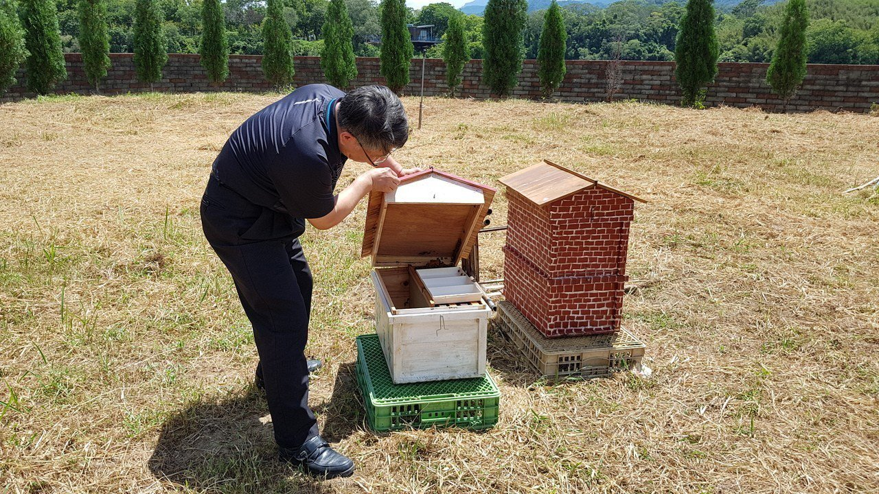 林吉財大方提供明湖水漾會館旁1千多坪土地供養蜂班利用,種植蜜源植物,也放置蜂箱進...