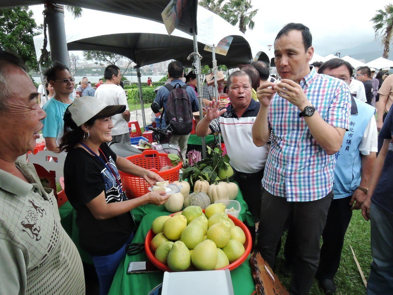 新北市長朱立倫今天下午到八里文旦柚展售會活動上,當場品嚐文旦柚,一口接一口,讚不...
