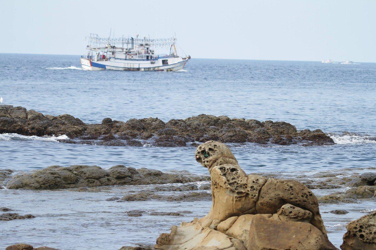 基隆鳥會理事長沈錦豐說,打算明年提報這隻海豹為基隆自然紀念物,它的潛力不輸野柳女...