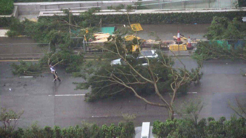 颱風山竹16日肆虐香港,一名車主試圖移開倒臥的路樹。 (路透)