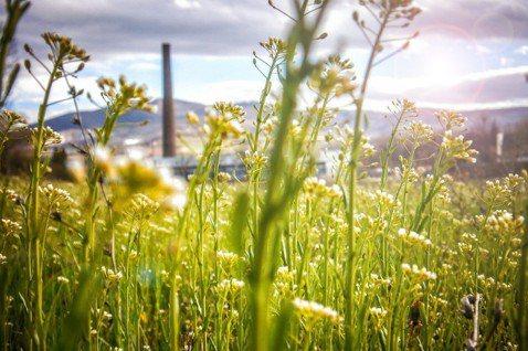 讓經濟和自然環境一同正向發展是循環經濟為來的發展目標。圖/pixabay