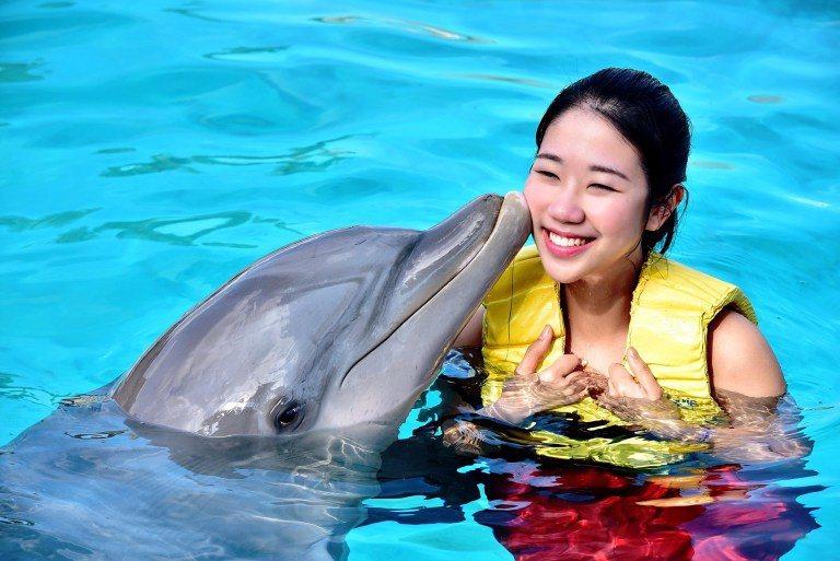 在Cozumel島可以用最經濟的方式,跟海豚游泳喔!(Photo source:...