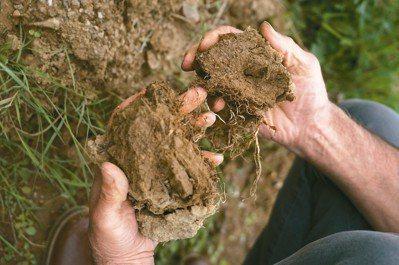 當理解到菌根菌與葡萄的共生關係後,才赫然發現除草劑和滅菌劑對土壤生態的傷害有多大...