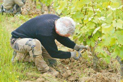 用與自然相合的耕作法,用最少的干預來釀造以真實呈顯風土原貌,是現今葡萄酒業的首要...