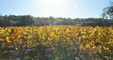 自然酒是友善大地的耕種法。