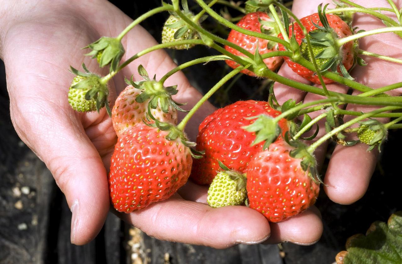 日本寄望促進東協國家保護植物品種。(歐新社)