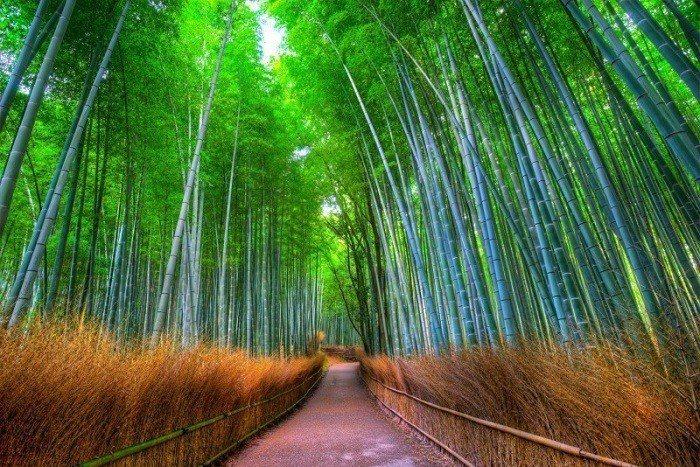 嵐山。 圖/fr.japantravel.com