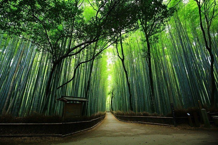 竹林之道。 圖/kyotomoyou.jp