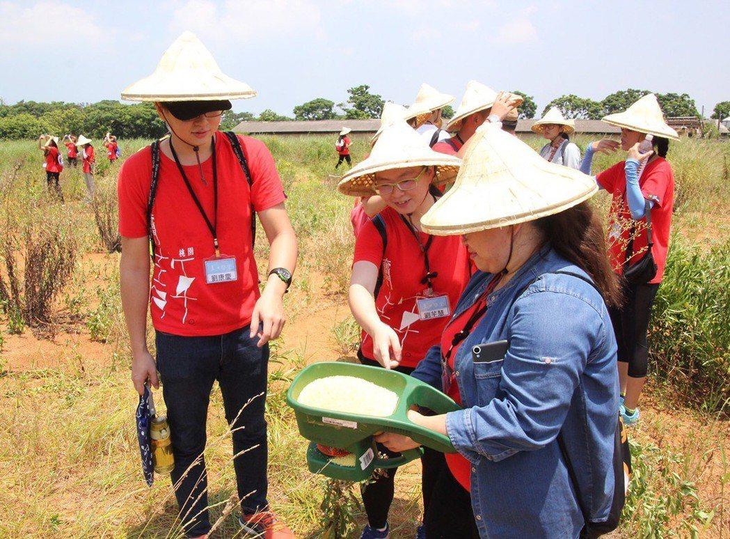 桃園市青年事務局舉辦夏日學堂一日紅火蟻防治。 圖/桃園青年局提供