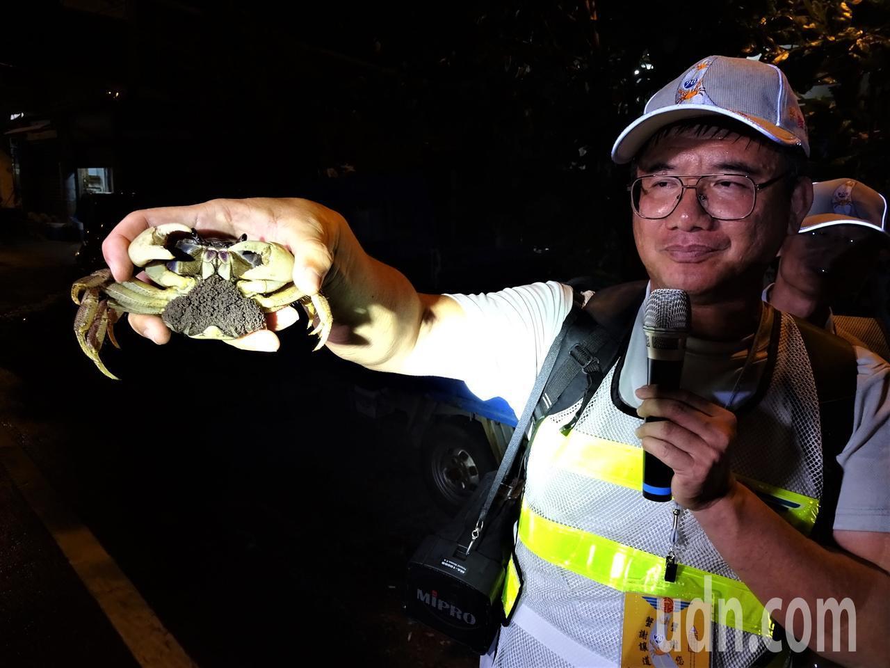 夏日月圓夜降海釋幼的4公分長的毛足圓軸母蟹,胸前抱著逾10萬隻幼苗。記者潘欣中/...
