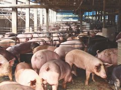 民眾違法攜帶陸肉品入境 上週開罰7件