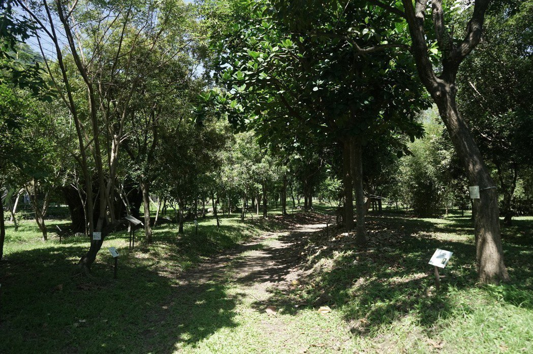 位於花蓮的亞泥生態園區有多達250種植物,包含平地難得一見的紅檜、紅杉等珍貴樹種...