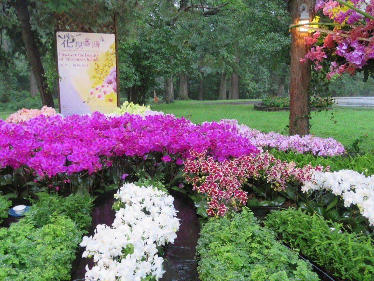 雙橡園舉行「花現台灣」蘭花展,用彎曲水道與蘭花園藝造景。華盛頓記者張加/攝影