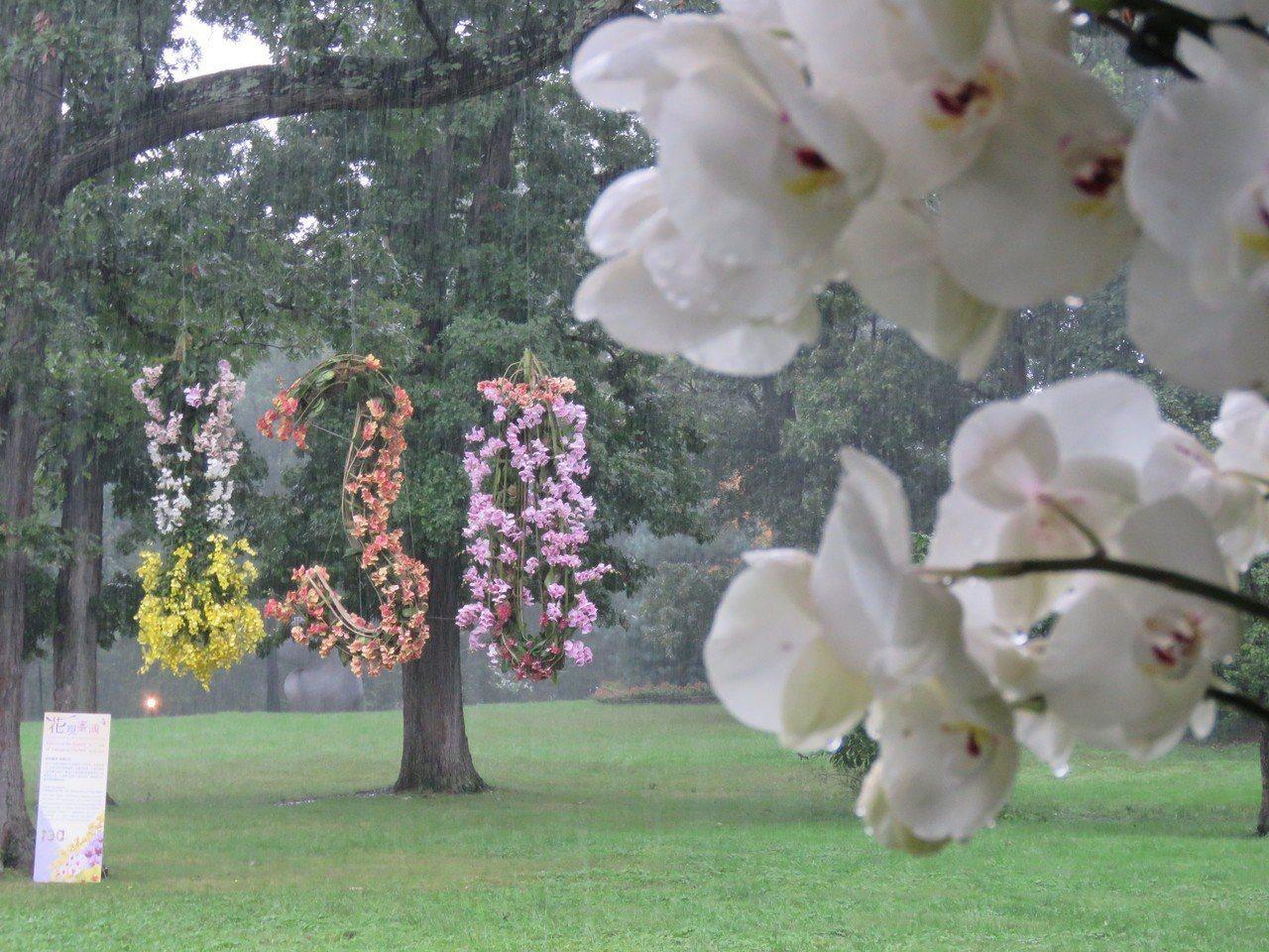 雙橡園舉行「花現台灣」蘭花展,裝飾出130字樣,以慶祝雙橡園130周年。華盛頓記...