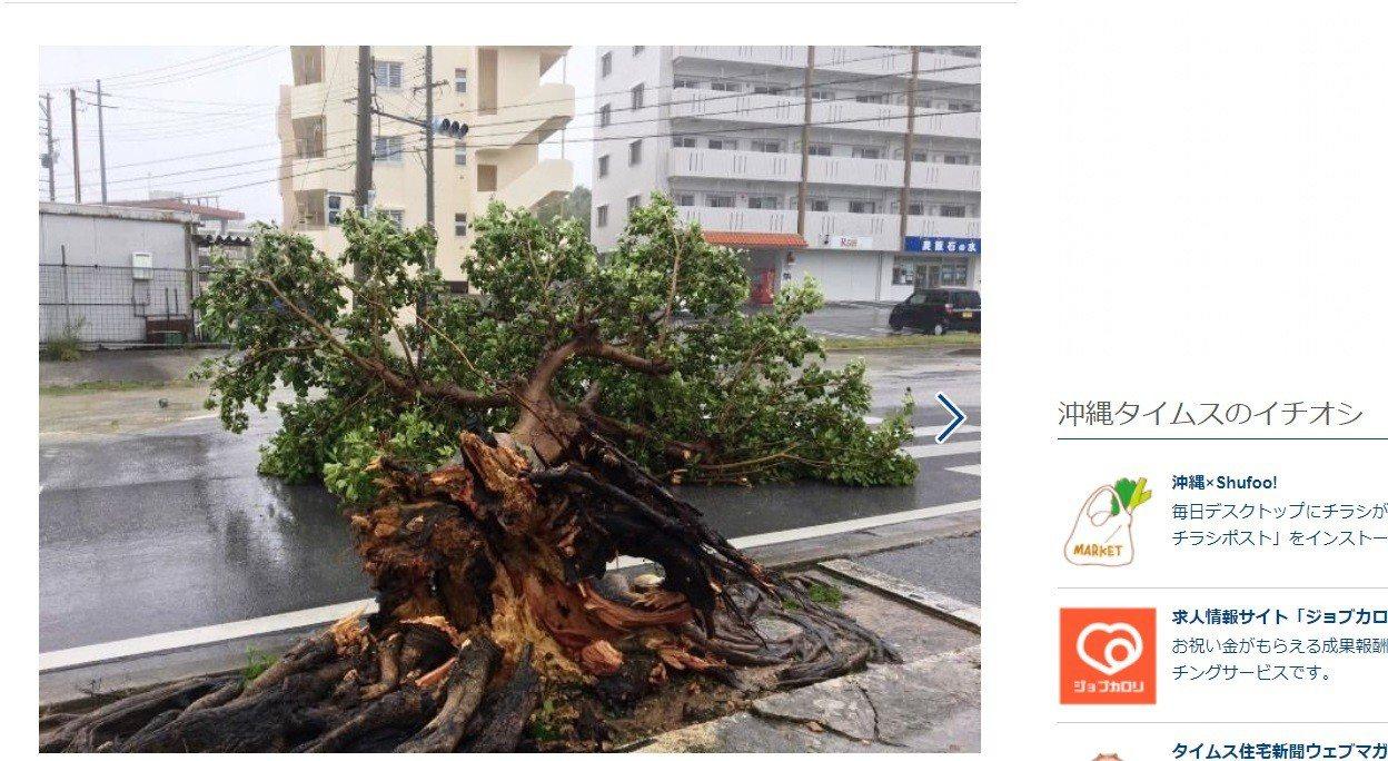 沖繩縣南城市一棵路樹被吹斷。取自沖繩時報網站