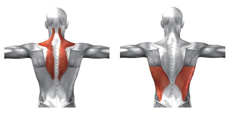 背部肌肉佔了上半身很大的部分,所以深深影響你的體態身型,而跟我們現在的文明病「腰...