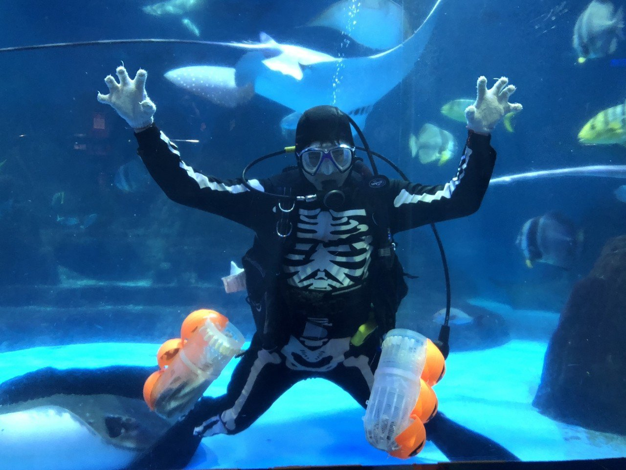 骷髏MAN在水族館表演餵食秀。圖/海洋公園提供