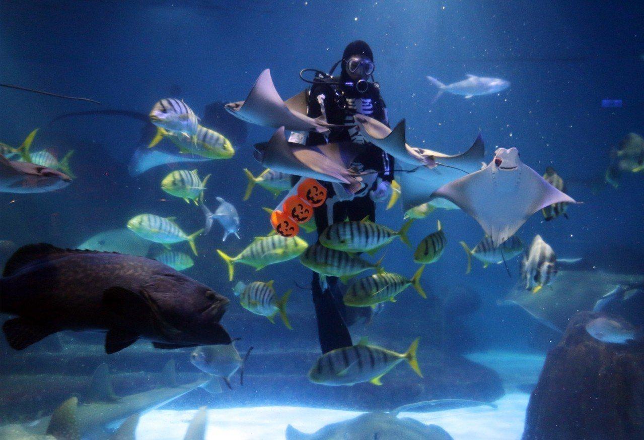骷髏MAN現身於園區內探險島水族館與雙髻鯊、叉頭燕魟共舞。圖/海洋公園提供