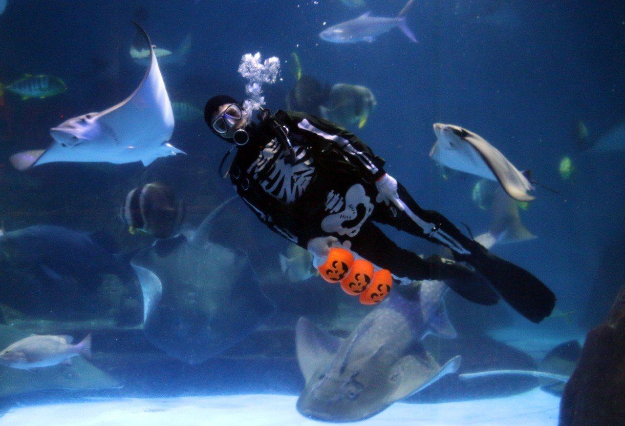 骷髏MAN現在水族館與魚共舞。圖/海洋公園提供
