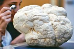 好讀周報/天敵? 研究發現真菌可讓塑膠自然分解