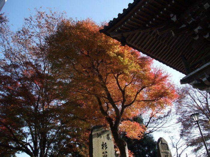 高尾山。 圖/Flickr
