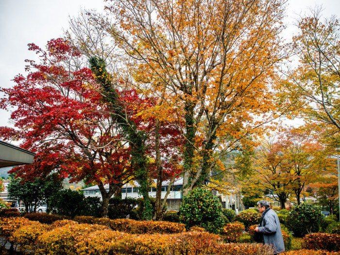 箱根。 圖/Flickr