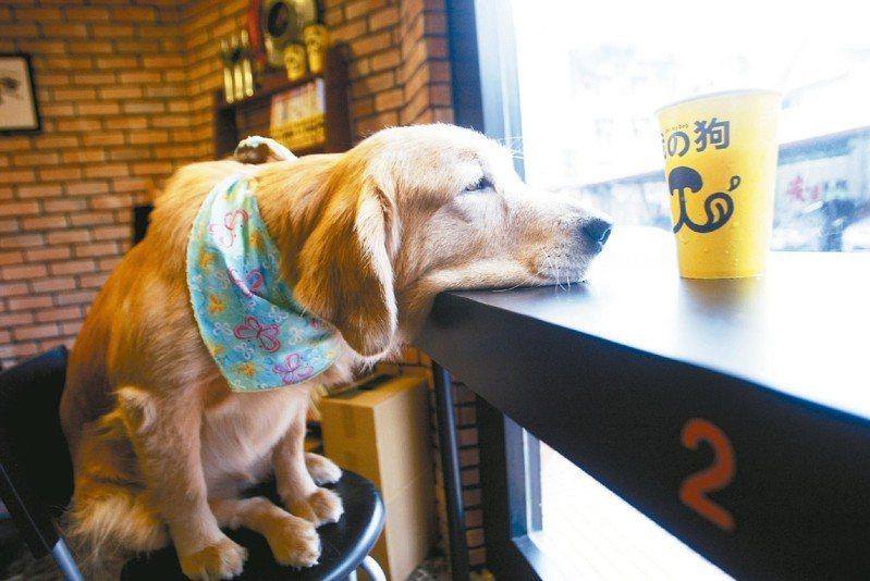 狗狗咳嗽的成因相當多。 圖/聯合報系資料照片