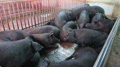 如果廚餘不餵豬 我家廚餘怎麼辦?