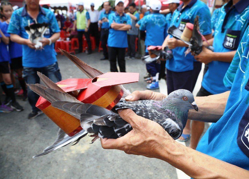台灣賽鴿文化與賽制以「機運式的公平」獨步全球,且結合「合法競技」和「非法博弈」。...