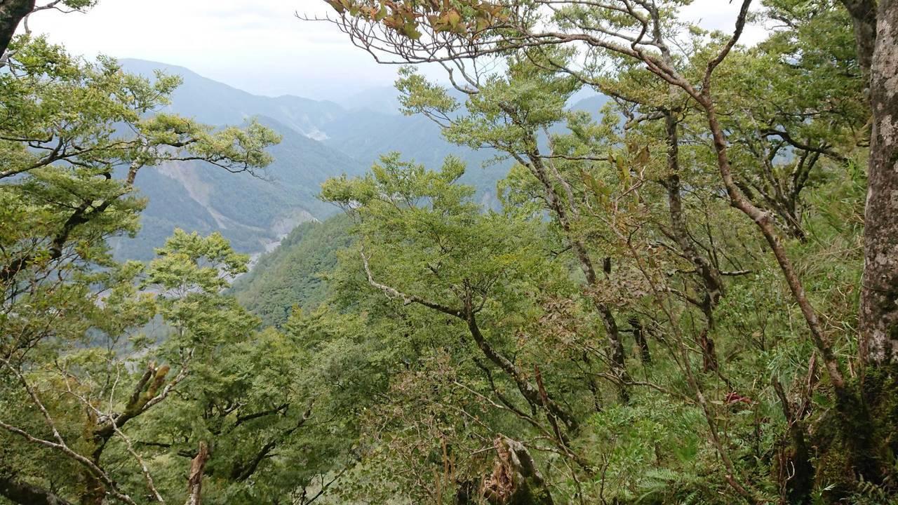 太平山上擁有臺灣最大面積的台灣山毛櫸原始林,入秋後,綠葉轉為金黃色,吸引眾多遊客...