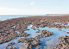 不惜破壞藻礁非蓋接收站不可 台大醫師:原因只有一個
