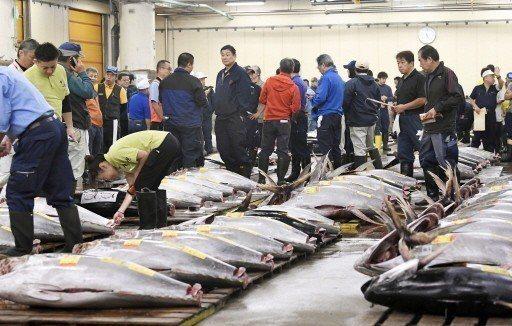 東京築地市場因漁獲青果物流繁盛,鮪魚競標就如同築地市場代名詞。 (美聯社)