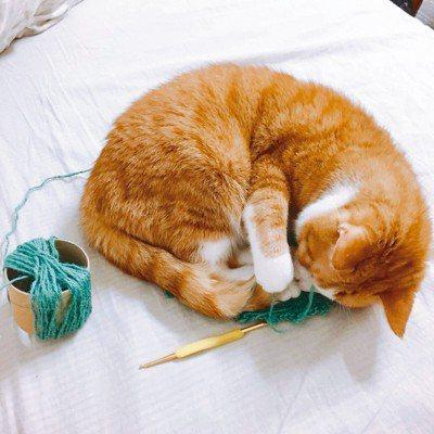 睡覺前,你可以和貓咪進行十到十五分鐘的互動式遊戲。攝影/陳雯婷