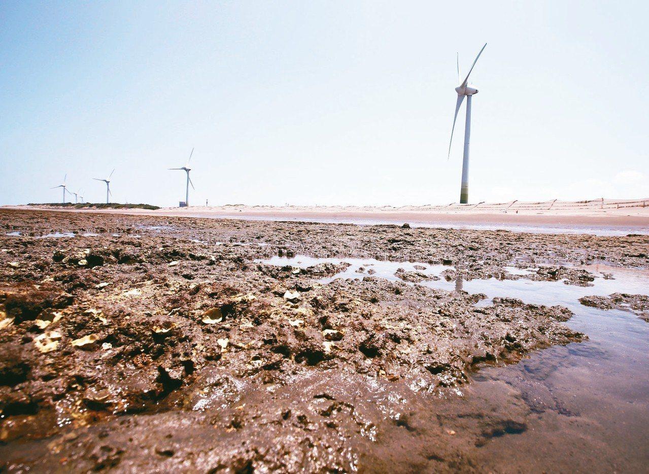 大潭藻礁。 記者林澔一/攝影