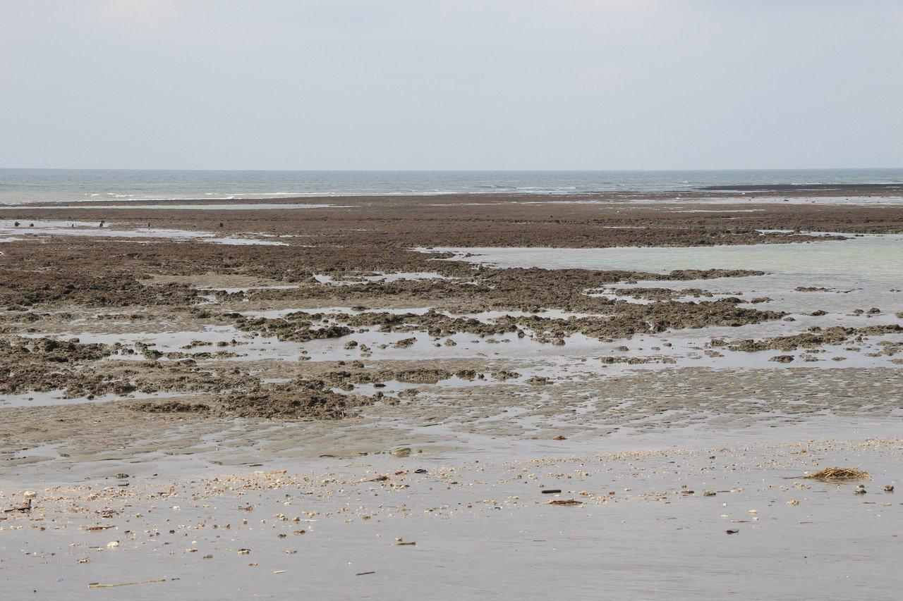 圖為大潭藻礁。 圖/聯合報系資料照片