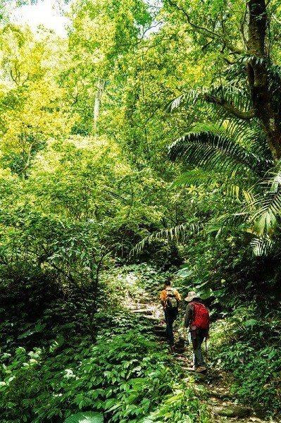 「樟之細路」沿著台三線,串聯桃園龍潭到台中東勢的古道、農路、小徑。