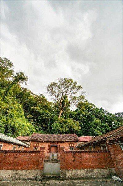 客家古厝是「樟之細路」上常見的風景。